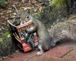 crazysquirrel