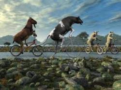livestockonbikes